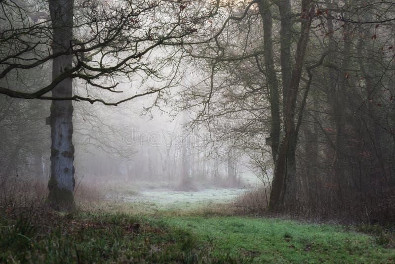 Trajeto enevoado da manhã da floresta com birdbox no inverno foto de stock royalty free