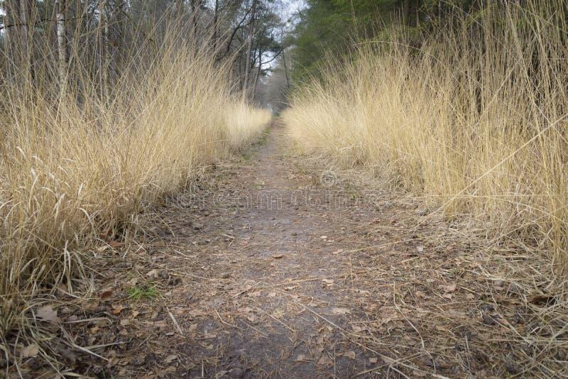 Trajeto entre a grama colorida dourada que dá a grande perspectiva no th foto de stock royalty free
