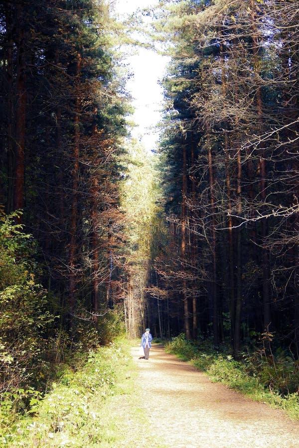 Trajeto escuro da sujeira através da floresta do outono fotografia de stock