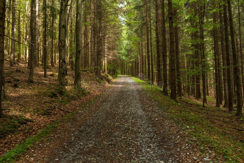 Trajeto estreito leve pela luz solar macia da mola Natureza da mola da floresta Paisagem natural da floresta da mola com árvores  imagens de stock