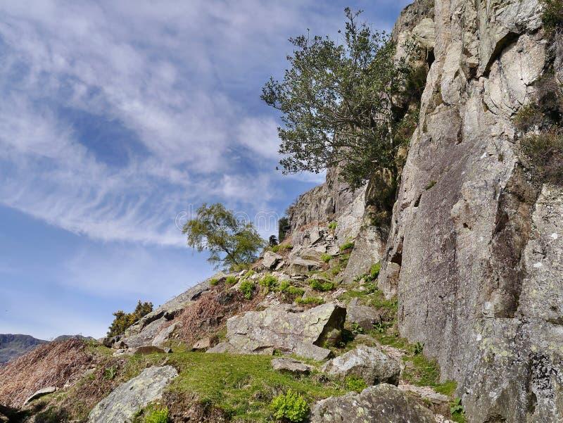 Trajeto gramíneo pela rocha com árvores fotografia de stock royalty free