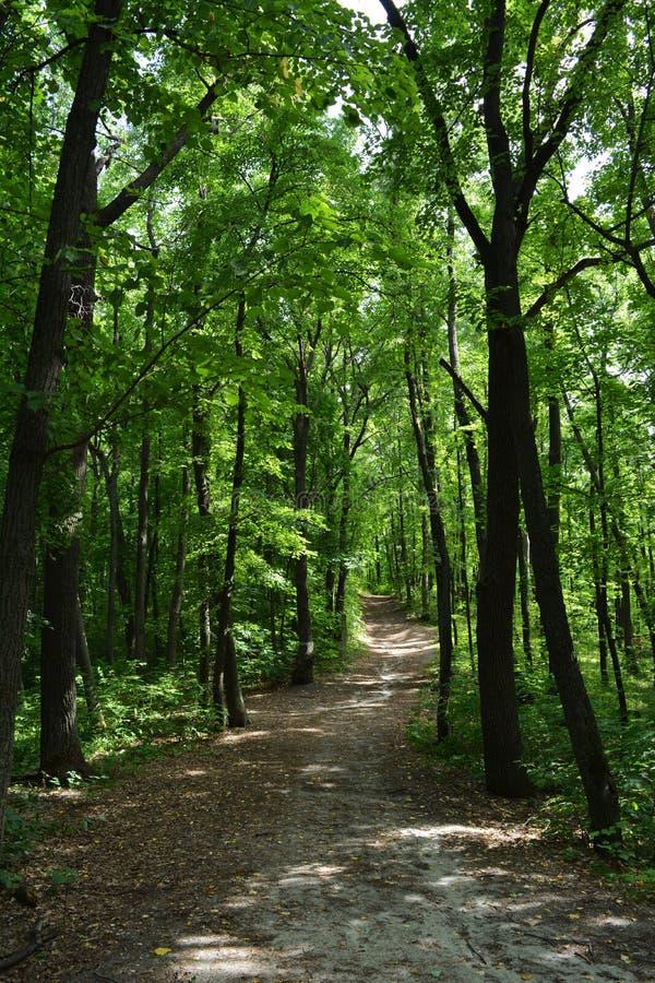 Trajeto mágico através da floresta verde luxúria fotografia de stock royalty free