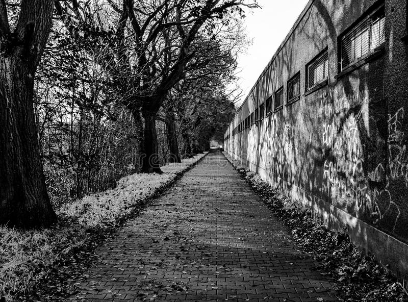 Trajeto misterioso abandonado em um parque durante o inverno PH monocromático fotos de stock royalty free
