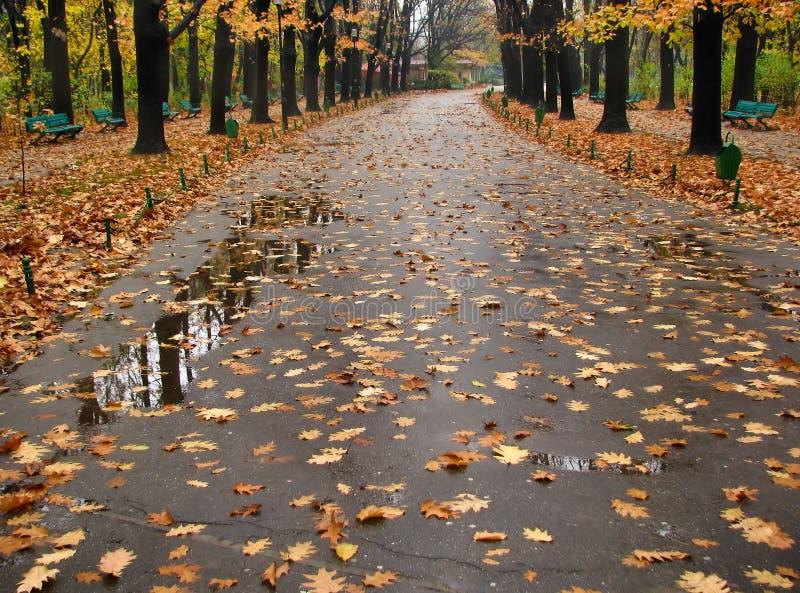 Trajeto molhado coberto com as folhas caídas fotografia de stock royalty free
