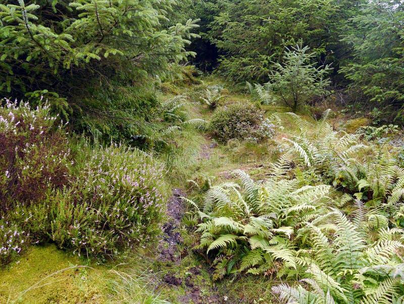 Trajeto na área pesada das hortaliças na floresta foto de stock