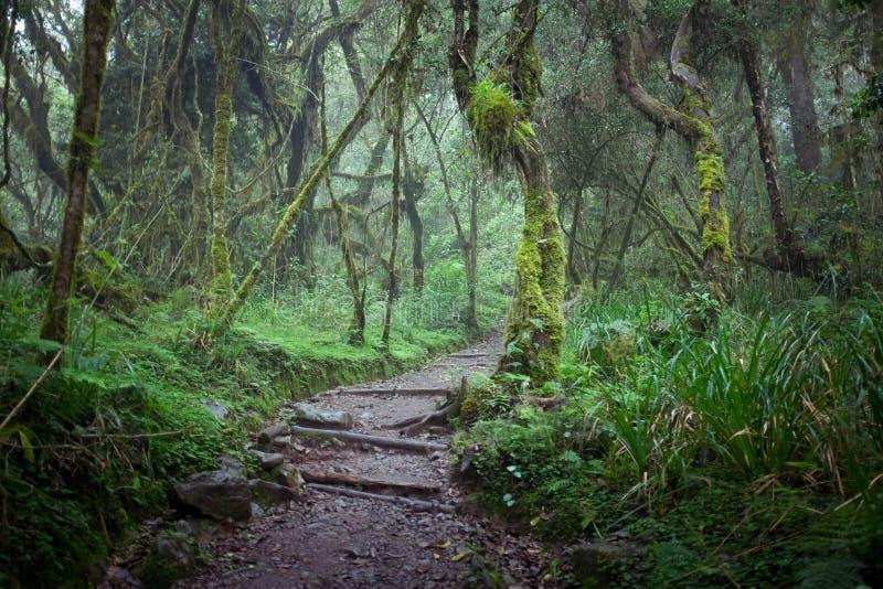 Trajeto na floresta úmida da selva fotos de stock