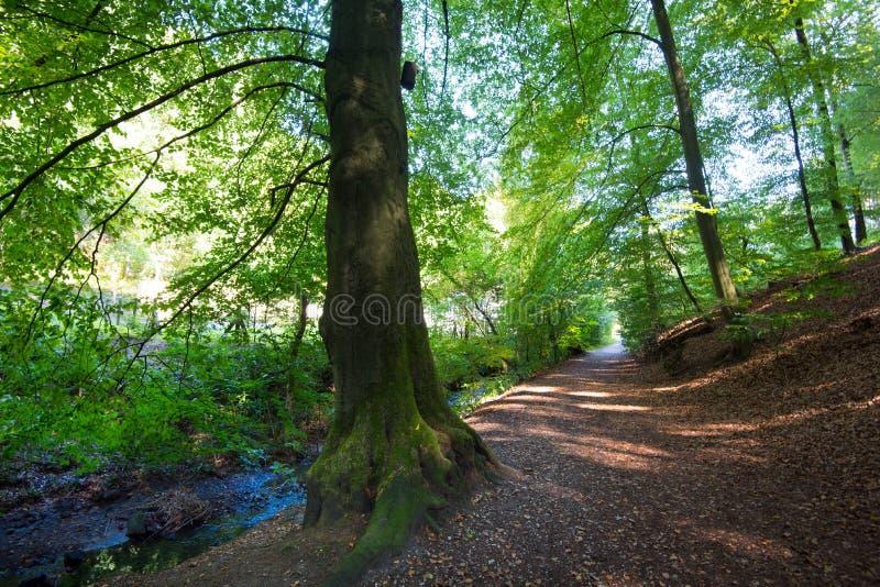 Trajeto na floresta de Teutoburger em Westphalia em Alemanha imagem de stock