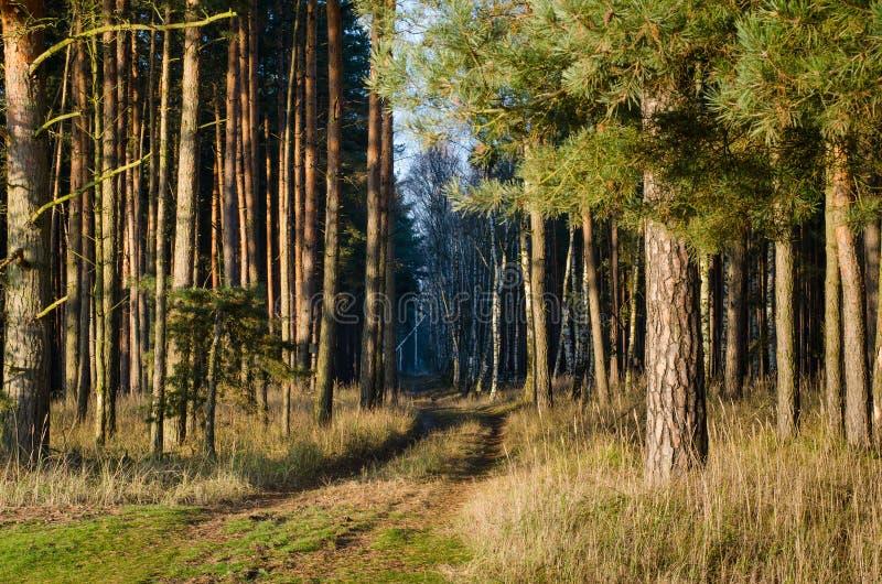 Trajeto na floresta ensolarada imagem de stock