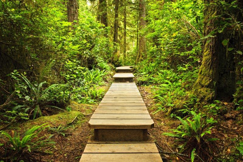 Trajeto na floresta húmida temperada imagem de stock