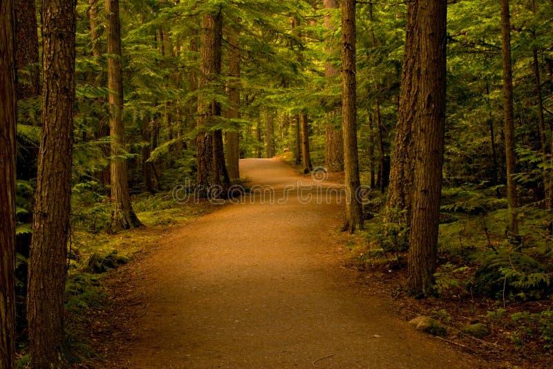 Trajeto na floresta/madeiras fotografia de stock royalty free