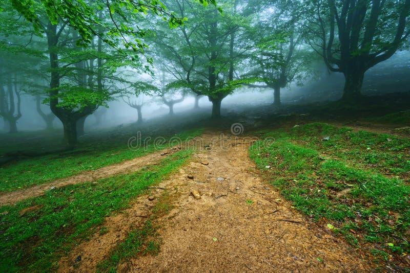 Trajeto na floresta nevoenta imagem de stock royalty free