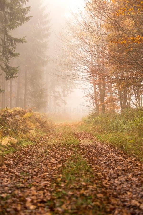 Trajeto na floresta nevoenta do outono fotos de stock