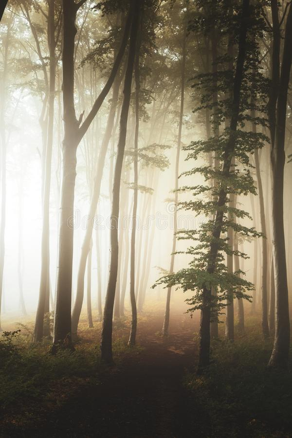 Trajeto na paisagem do conto de fadas dentro das árvores nevoentas da silhueta da floresta na floresta temperamental fotos de stock royalty free