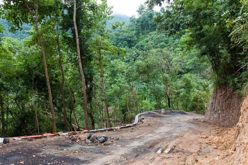 Trajeto na selva foto de stock royalty free