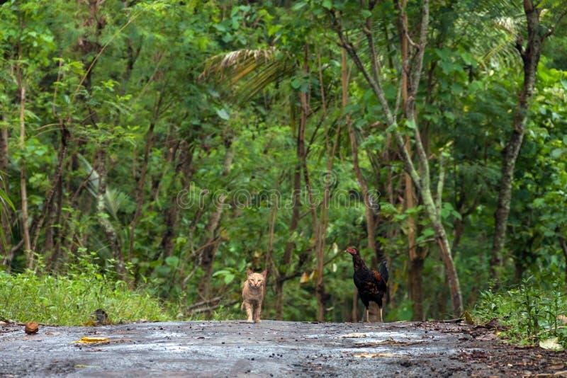 Trajeto na selva foto de stock