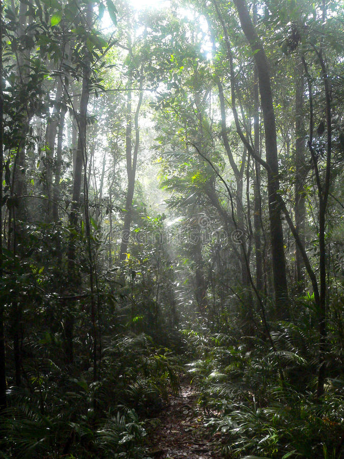 Trajeto na selva fotografia de stock