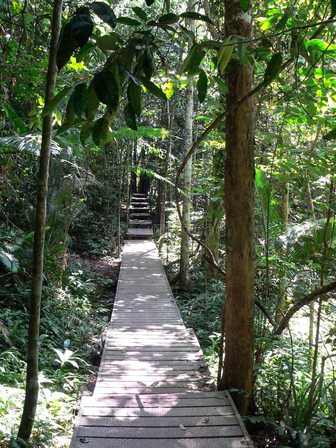 Trajeto na selva em Taman Negara, Malásia imagem de stock royalty free