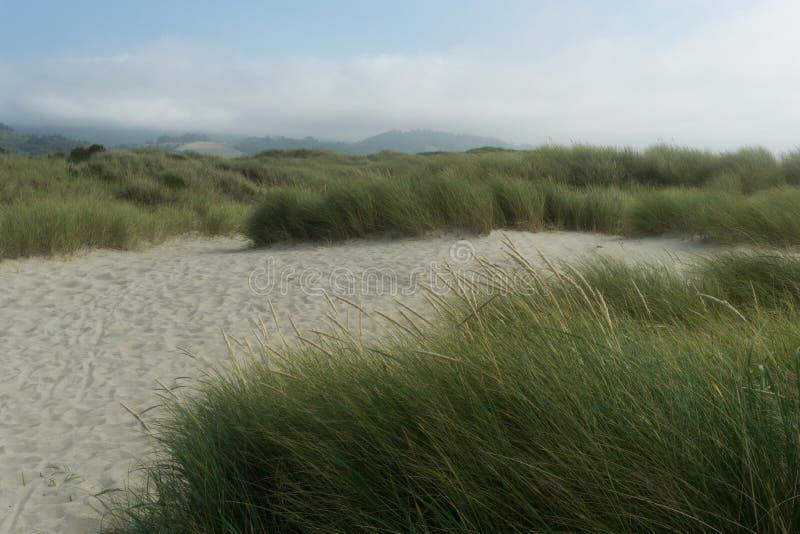Trajeto nas dunas com grama imagem de stock royalty free