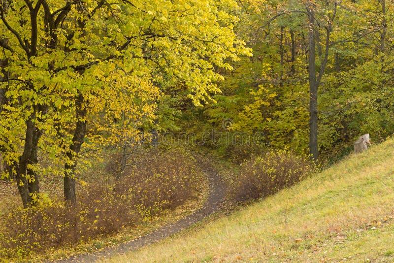 Trajeto nas madeiras do outono foto de stock royalty free
