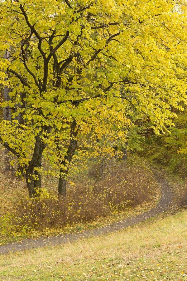 Trajeto nas madeiras do outono, verticais foto de stock royalty free