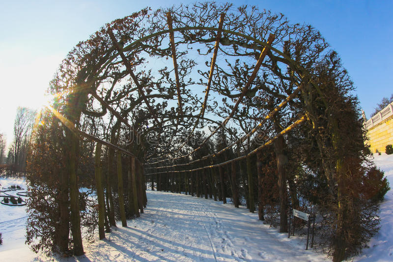 Trajeto nevado através da floresta do inverno imagens de stock royalty free