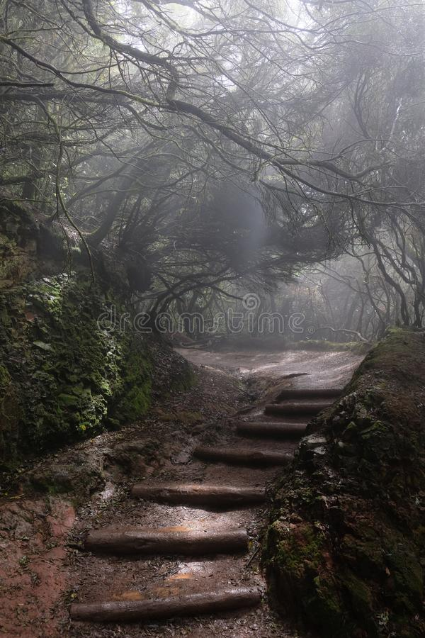 Trajeto nevoento na floresta molhada imagens de stock royalty free