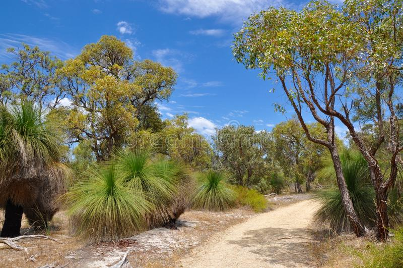 Trajeto no australiano protegido Bushland fotografia de stock