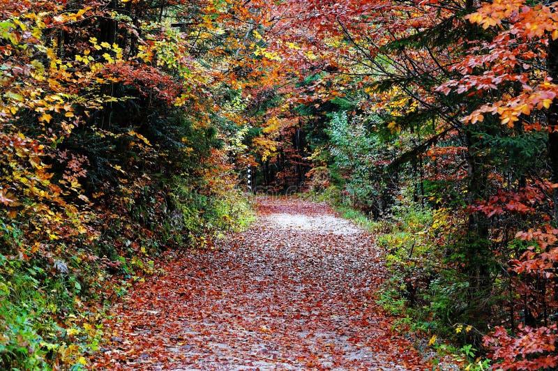 Trajeto no cenário colorido da floresta da queda imagem de stock