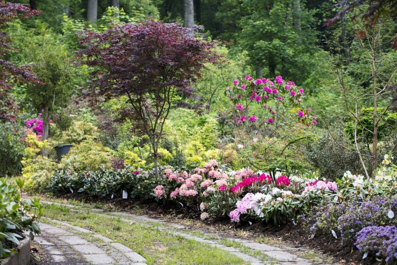 Trajeto no jardim entre flores, vista agradável imagem de stock