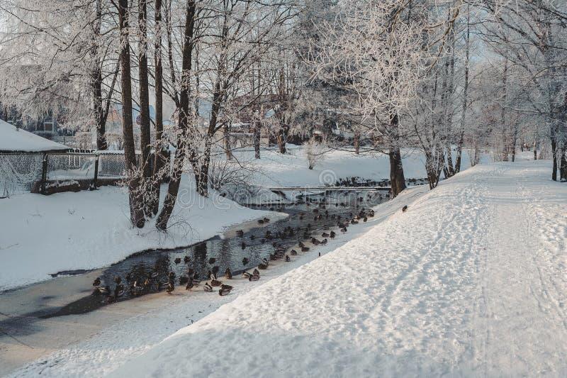 Trajeto no parque do inverno ao longo do canal com patos ?rvores do inverno cobertas com a geada foto de stock