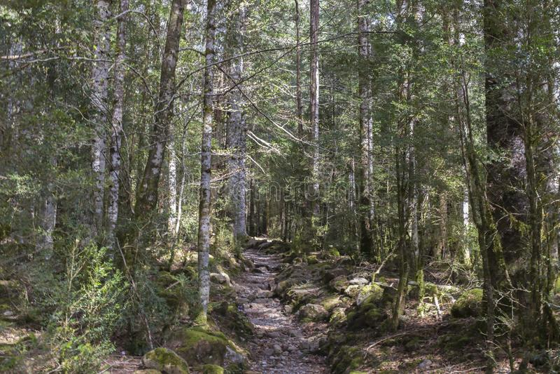 Trajeto no parque nacional de Ordesa y Monte Perdido fotos de stock