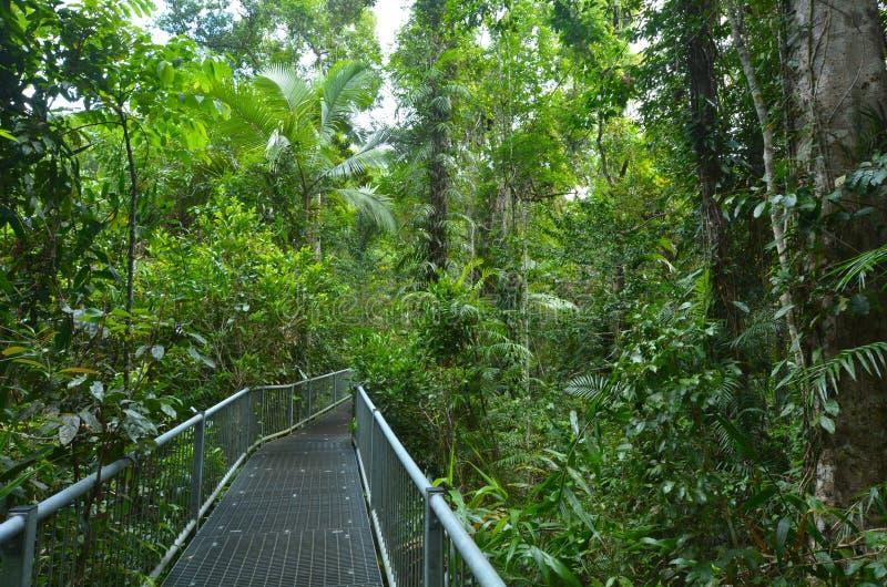 Trajeto no parque nacional Queensland de Daintree, Austrália fotos de stock