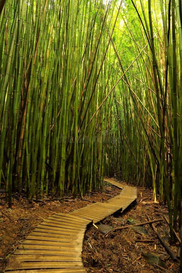 Trajeto no throgh do parque estadual de Haleakala a floresta de bambu imagem de stock royalty free