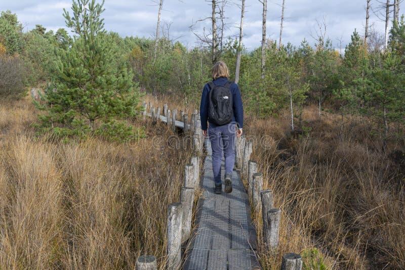 Trajeto pequeno com caminhante Drenthe imagem de stock