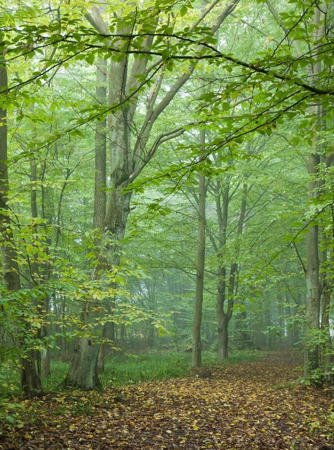 Trajeto que cruza a floresta outonal enevoada imagens de stock royalty free