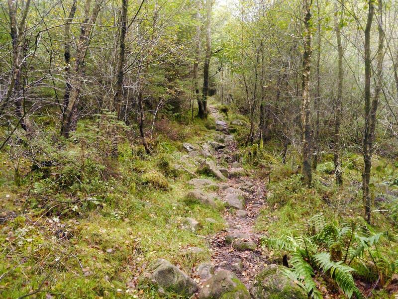 Trajeto rochoso através da plantação de Ennerdale, distrito do lago imagem de stock royalty free