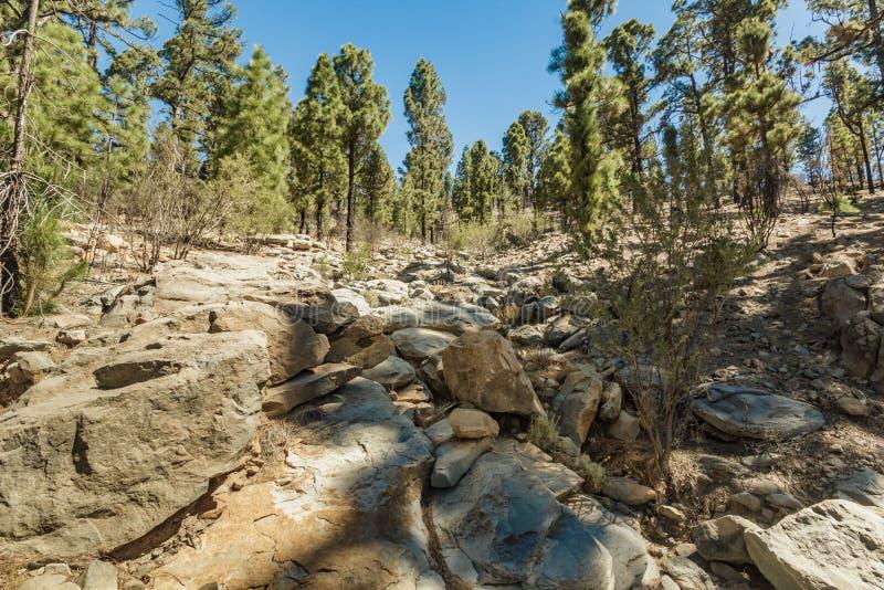 Trajeto rochoso cercado por pinheiros no dia ensolarado Céu azul claro e algumas nuvens ao longo da linha do horizonte Estrada de fotos de stock royalty free