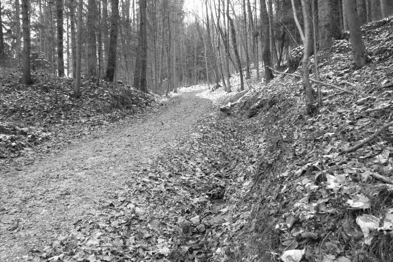 Trajeto só do pé na floresta bávara imagens de stock