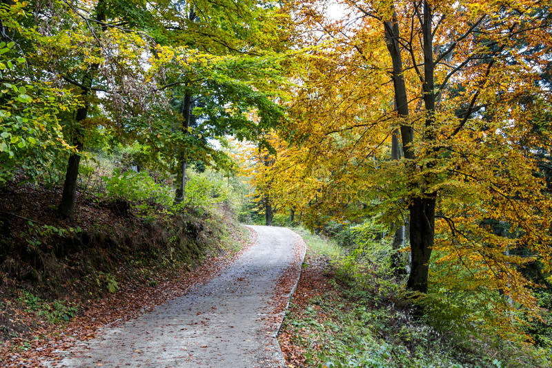 Trajeto só em Autumn Forest foto de stock royalty free