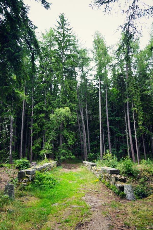 Trajeto sobre a ponte de pedra na floresta, conceito da aventura do curso da exploração fotos de stock