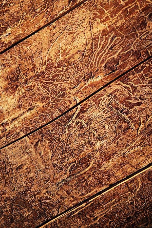 Trajetos dos besouros na madeira velha fotos de stock royalty free