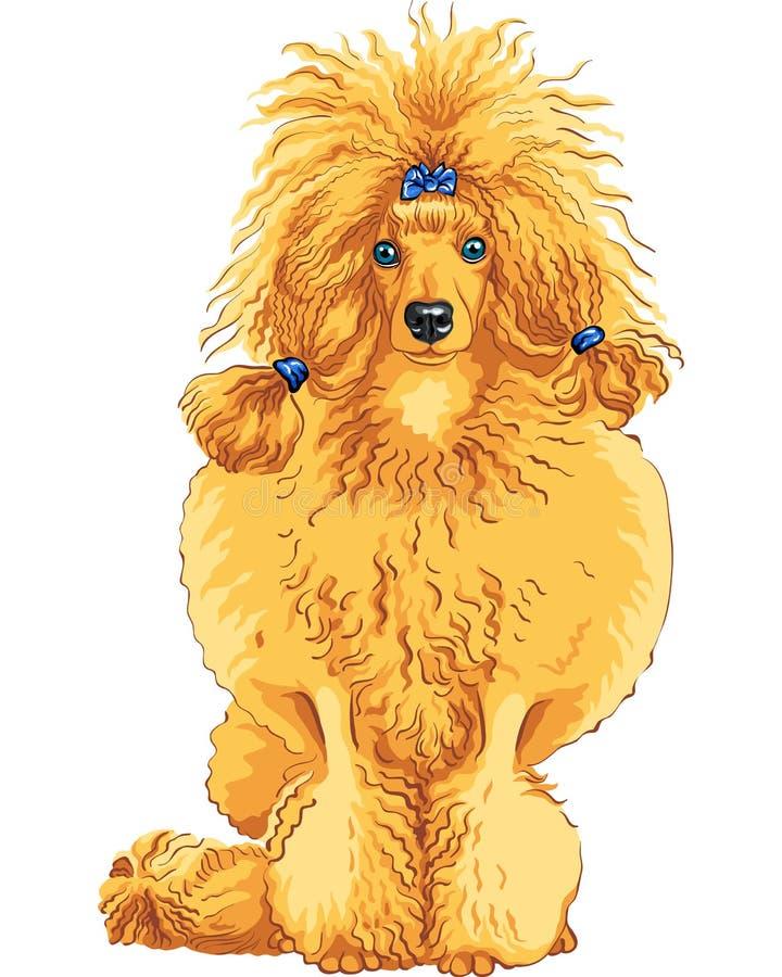 trakenu koloru psa pudla czerwony nakreślenia wektor ilustracji