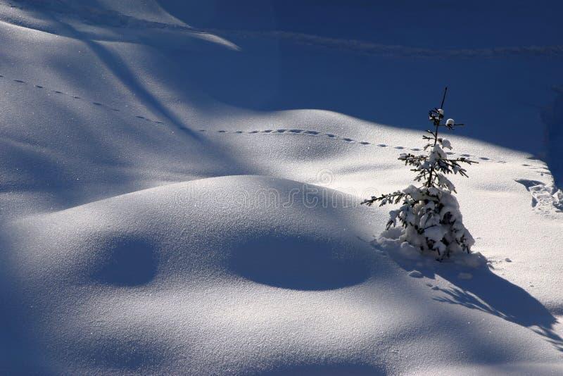 Traks op de sneeuw stock foto's