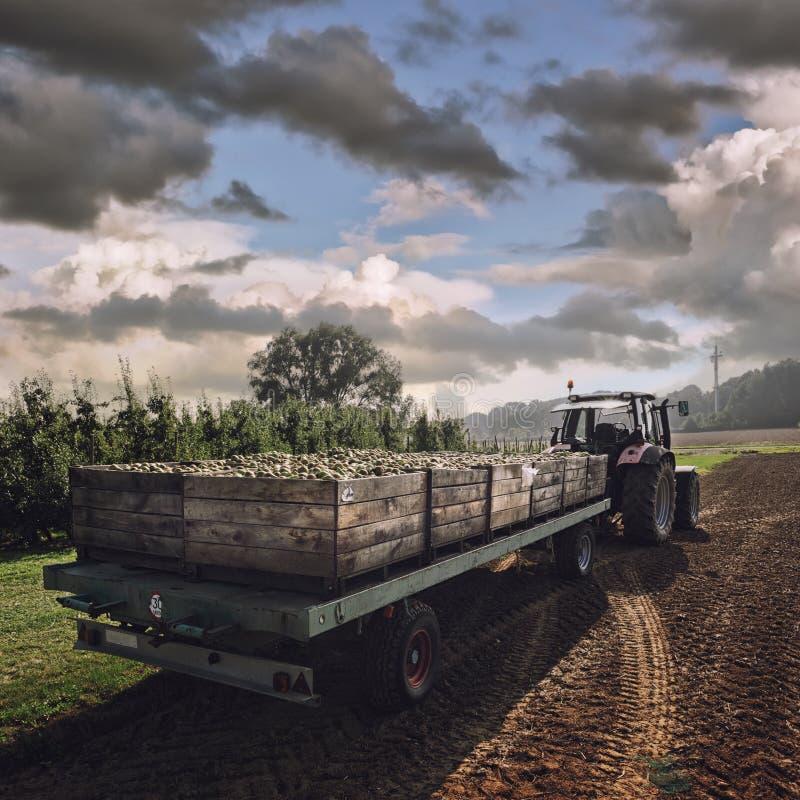 Traktor, der hölzerne Kisten mit Birnen trägt lizenzfreie stockfotos
