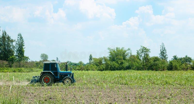 Traktor, der hinten ein Zuckerrohrfeld des Staubes pflügt lizenzfreies stockfoto