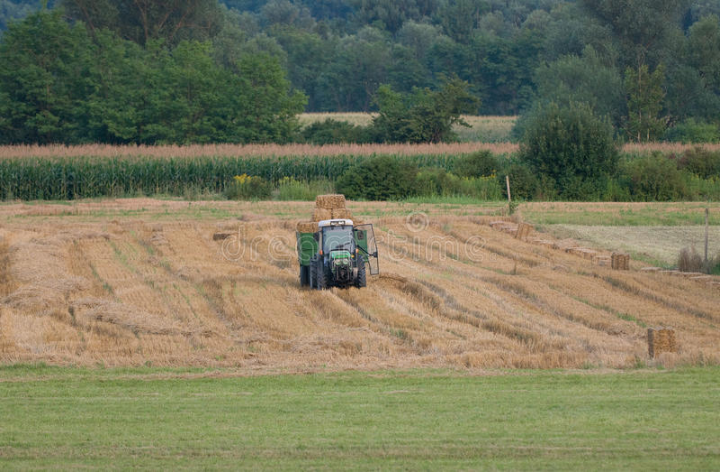 Traktor med släpet som är full av höbaler royaltyfri fotografi
