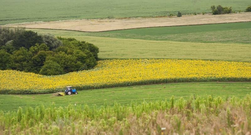 Traktor på fält a royaltyfri fotografi