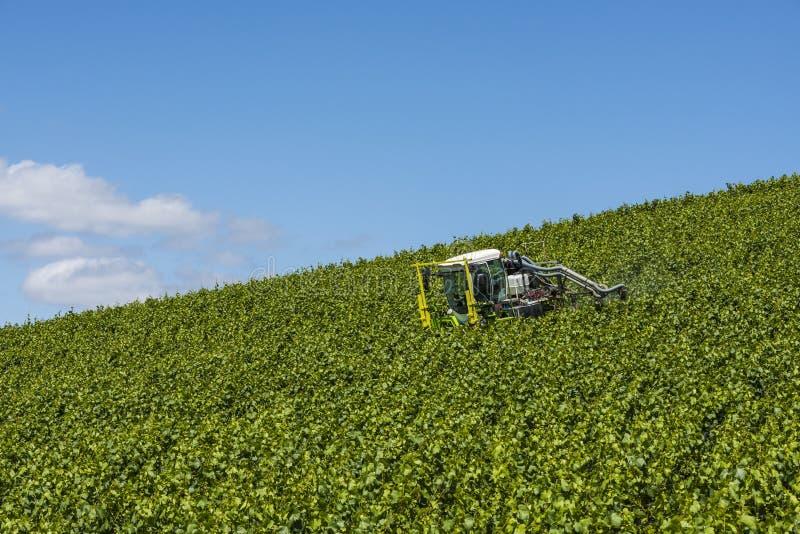 Traktor-Sprühreben im Weinberg stockbild