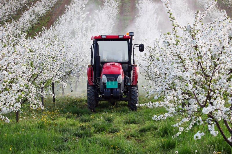 Traktor sprüht Insektenvertilgungsmittel bei der Kirschgartenlandwirtschaft stockfoto