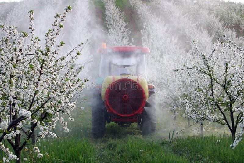Traktor sprüht Insektenvertilgungsmittel im Kirschgartenlandwirtschaftsfrühling lizenzfreies stockfoto